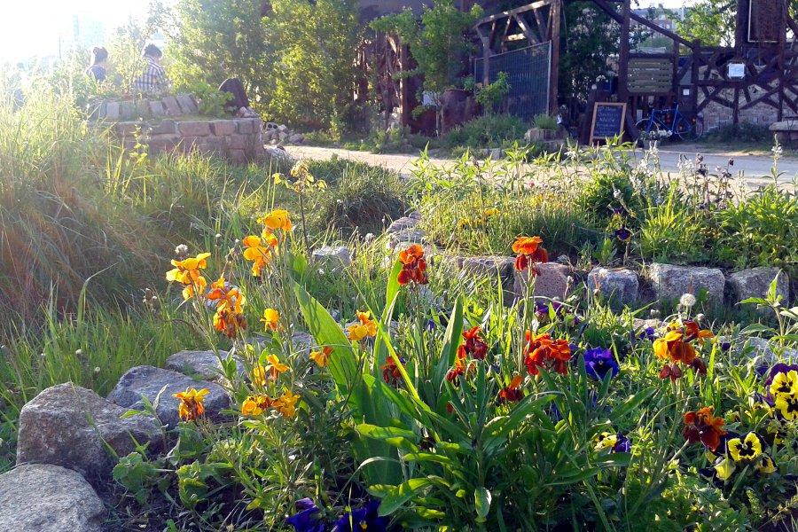 Wilder Hase im Nirgendwo Blumen vorm Biergarten