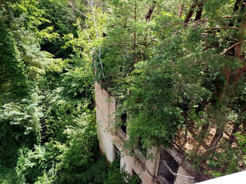 Blick von 23 m Höhe auf eine Ruine mit Bäumen auf dem Dach