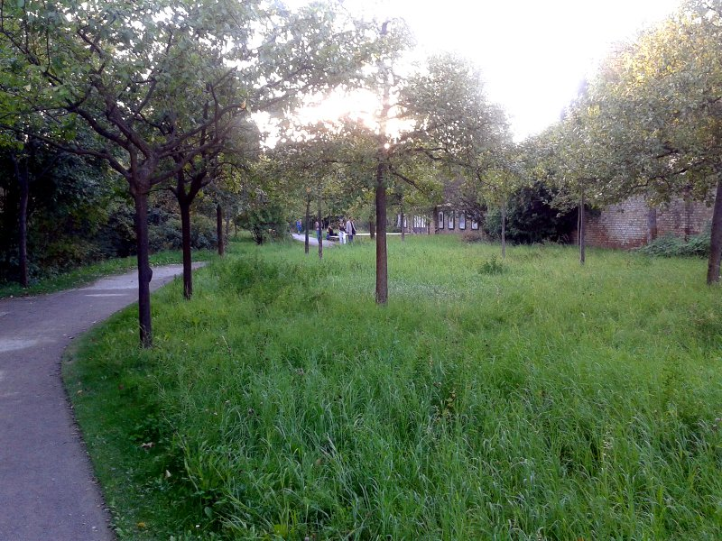 Die Kräuter-Langgraswiese samt Obstbäumen