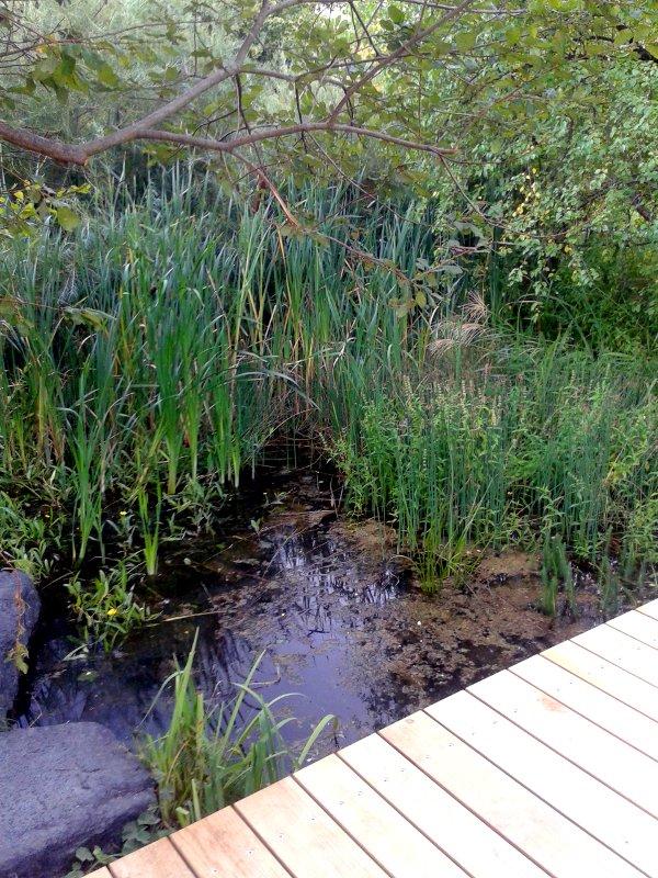 Der saubere Steg über den kleinen Tümpel zeigt, wie umsichtig der Comenius Garten gepflegt wird