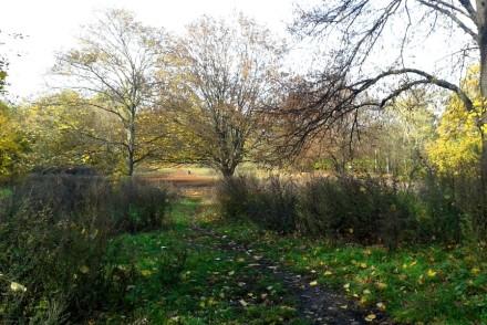 Sanfter Hügel im Park