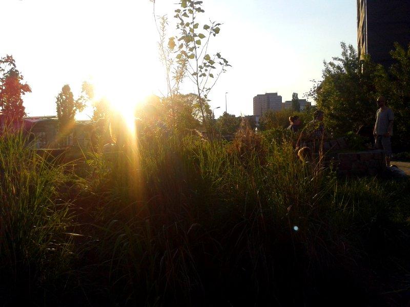 Gras und Menschen vor der untergehenden Sonne